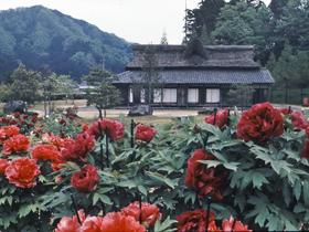 四季折々の花が咲き誇る「万葉集の舞台」