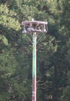 人工巣塔の上に作った巣に伏せるコウノトリ=4月15日、福井県越前市安養寺町