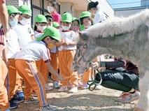 福井のこども園で馬と触れ合い体験