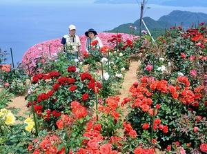 色とりどりの花が咲き誇るバラ園=8日、レインボーラインの山頂公園