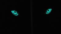 光るオオカミの目?イノシシ撃退