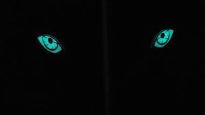 夜間に発光する「イノ用心」