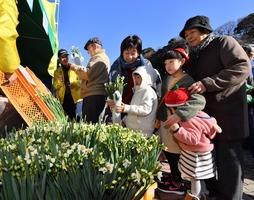 水仙を買い求める人らでにぎわった「こしの水仙まつり」=1月11日、福井県福井市居倉町の越前水仙の里公園
