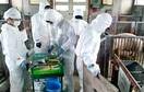 豚ワクチン接種、県内農家が安堵