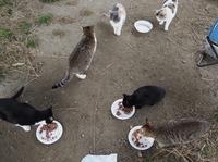 野良猫減らす地域猫活動…最大のハードルは住民の理解 餌やりや糞尿掃除にもルール必要【杉本彩のEva】