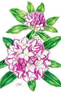 【レッツ!植物楽】ジンチョウゲ(沈丁花) ジンチョウゲ科 花も香りも共に上品