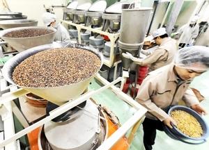 福井県産ソバの製粉がピークを迎え、フル稼働で作業に当たる従業員=福井市高木中央1丁目のカガセイフン