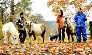 越冬用の畜舎へ移動するポニーたち=11月25日、福井県大野市南六呂師