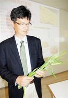デュラム小麦と「ふくこむぎ」を交配した雑種を手にする村井耕二教授=福井市内