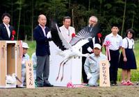コウノトリ3羽が大空へ、福井