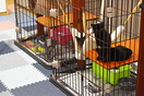 犬猫保護施設「圧倒的に猫多い」