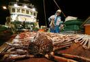ズワイガニ、日本海で一斉に競争