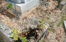 お盆の墓参り注意、イノシシ被害増