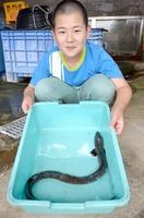 体長約90センチの大きなウナギ=6月11日、福井県越前町玉川