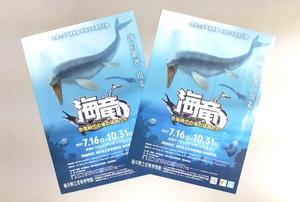 海生爬虫類にスポットを当てた福井県立恐竜博物館の特別展のチラシ