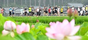 早朝の山里を駆け抜ける花はす早朝マラソンのランナー=2019年7月、福井県南越前町