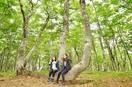 新緑や自然の音色、感動のブナ林