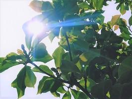 まぶしい日差しが降り注いだ福井県内=福井県福井市、6月5日午後1時ごろ