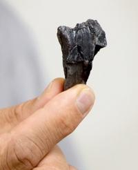 長崎に恐竜地層「新産地の可能性」