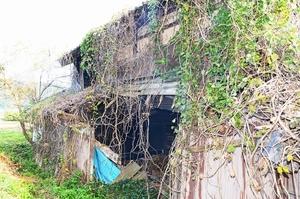 手つかずになり、つたに覆われた空き家。今後は所有者が見つからないケースも考えられるという=10月、福井県越前町