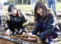 関西圏の女性おおいを満喫 ジネンジョ掘り体験