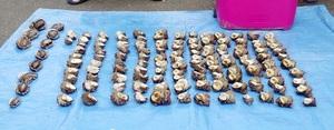 愛知県の男性2人に密漁されたサザエ122個、アワビ11個=7月6日、福井県高浜町内(小浜海上保安署提供)