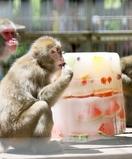 サルに「氷のケーキ」、ウッキウキー