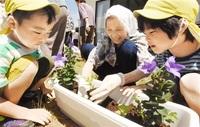 サッカー会場に花を 坂井 園児、お年寄り苗植え 2018福井しあわせ元気国体・大会