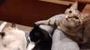 愛猫3匹が狙うは太もも!? 飼い主ならではのうれ…