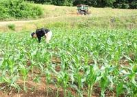 担い手育成 新助成、営農強化で支援 JAどう変わる_ふくい迫る県域合併(6)