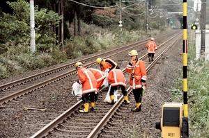 列車が通過する合間に線路へ入り、杉の枝葉を拾い集める社員=25日、福井県南越前町南今庄のJR南今庄駅付近