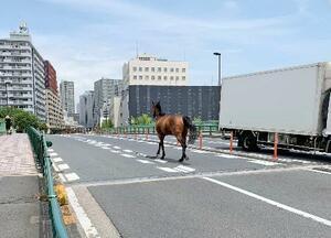 道路を走る馬=25日午前、東京都品川区