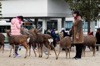 奈良のシカでけが、最多