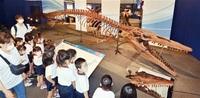 海竜の世界を探検だ 県立恐竜博 特別展が開幕
