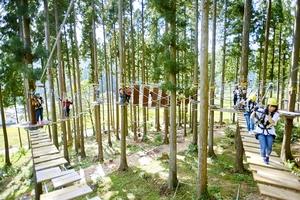 2022年度末を目標に拡張する計画が示されたツリーピクニックアドベンチャーいけだ=福井県池田町志津原