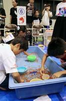 全国金魚すくい大会を開催、奈良