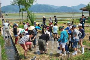 5月に行われたキッズエコラボ。エコネットのビオトープでの田植えは子供たちも楽しそう