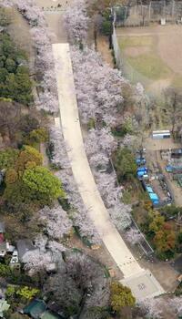東京・上野は桜満開も人影少なく