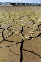 膨らみ続ける農林水産被害