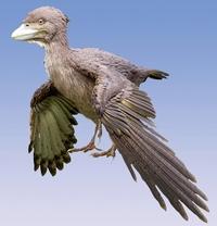 福井に始祖鳥の次に原始的な鳥類