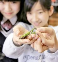 女児の手の上でささ身を食べるカマキリのチーちゃん=22日、福井市内