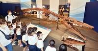 福井県立恐竜博物館で「海竜」開幕 絶滅した海生爬虫類の化石など80点