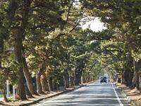長年の夢実現し満足感 歴史に接する旧街道 石川文洋80歳・列島縦断あるき旅(27)