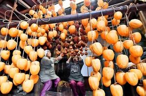 作業場につるされる柿。いぶして甘みを引き出す=22日、福井県南越前町孫谷