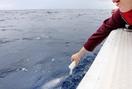 亡き妻の願い、沖縄の海で散骨