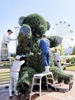 菊を用いたクマの形の造形物を設置する市職員ら=29日、福井県越前市武生中央公園