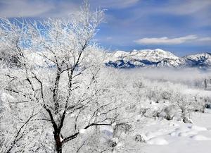 厳しい冷え込みで霧氷に白く覆われた九頭竜川沿いの木々=15日午前9時50分ごろ、福井県勝山市