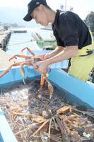 初回の漁を終え水揚げ作業に追われる関係者=6日午前9時40分ごろ、福井県越前町大樟の越前漁港