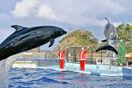 もうすぐXマス、イルカが盛り上げ