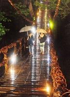 ライトアップされたかずら橋を渡る来場者=福井県池田町